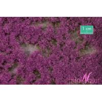 Groundcover violet summer 1/87